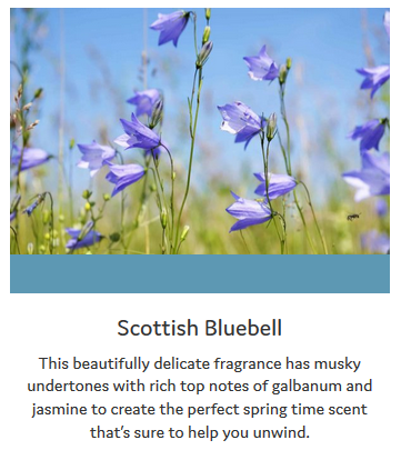 Scottish-Bluebell-Info