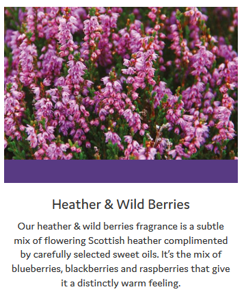 Wildberries-Info
